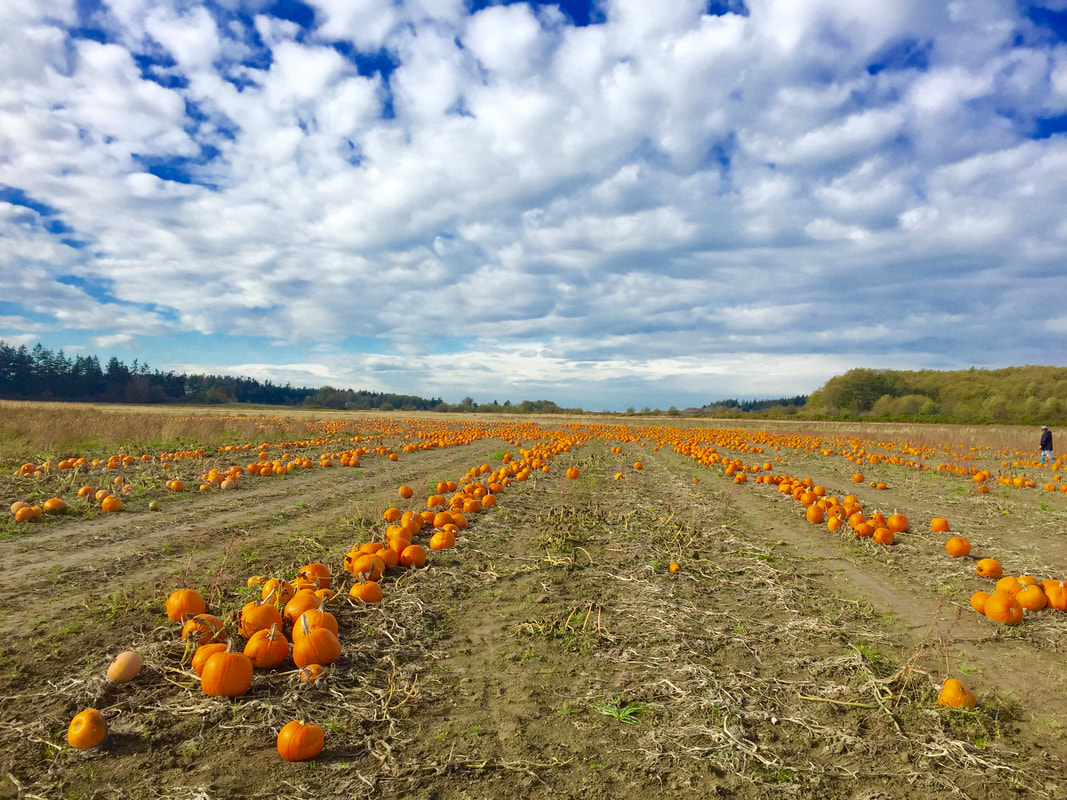 Miss Windsor: photo for pumpkin patch in America (Washington State)